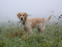 Dana im Nebel