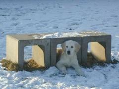 in der Hundeschule