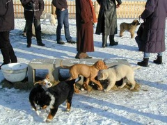 Ilea in der Hundeschule