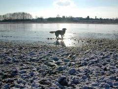 Ilea kann übers Wasser laufen