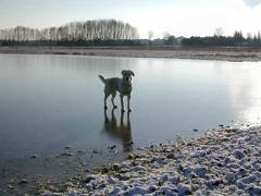 Ilea auf dem Eis