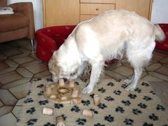 Hundespiel für Ilea