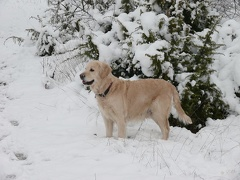 Ilea im Schnee