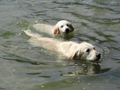 Schwimmen lernt man im See