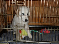 Xavi im Hundeknast