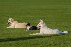 3 auf einem Rasen