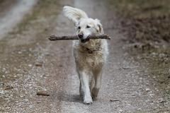 Ilea sammelt Holz