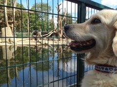 Xavi im Zoo