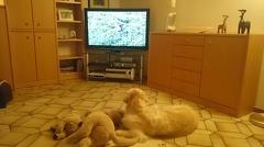 Xavi kuckt Dog TV