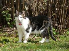 Monty auf Streifzug durch den Garten