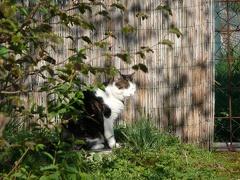 Monty von der Sonne geblendet