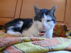 Monty letztes Foto