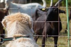 Xavis Begegnung mit Ziegen in der Kasinger Heide