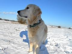 Xavi im Schnee