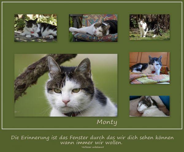 Monty_Collage Monty klein