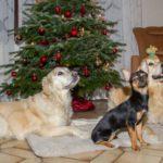 Xavi Blog Weihnachten mit Sydney_2013_12_24_2024_Canon EOS 7D_IMG_3065_WEB